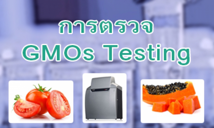 การตรวจ Genetically Modified Organisms (GMOs)